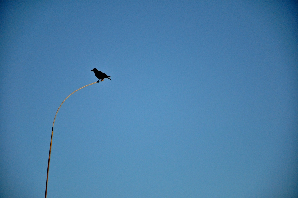 bird on antenna