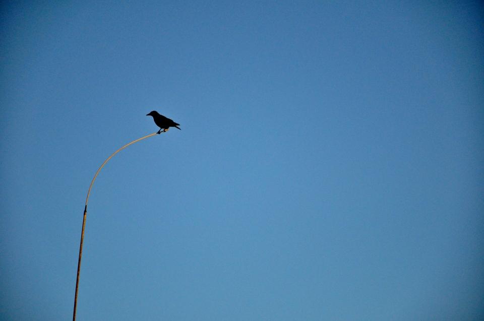 bird on antenna